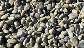Medium River Stone Go Grow Ballina